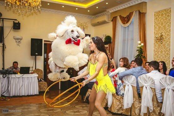 Дрессированные животные в Омске